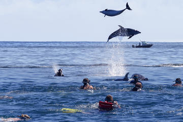 Bay of Islands Dolphin Cruise from Paihia or Russell