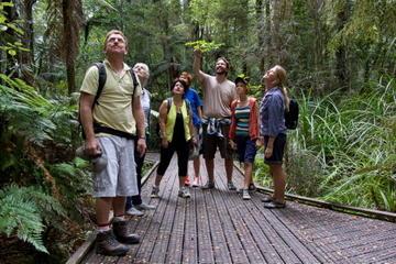 Bay of Islands Shore Excursion: Puketi Rainforest Guided Walk