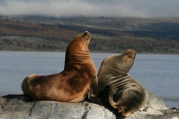 Beagle Channel and Seal Island Catamaran Tour from Ushuaia