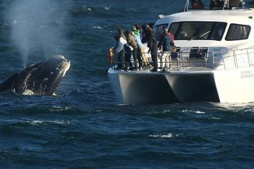 Boat Based Whale Watching from Hermanus
