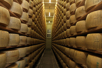 Bologna Food Experience: Parmigiano Reggiano Factory Visit, Wine and Vinegar Tasting and Lunch from Florence
