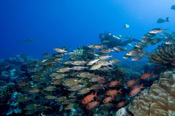 Bora Bora Fun Certified Scuba Dive