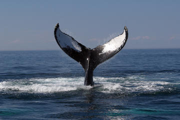 Boston Whale Watching Cruise
