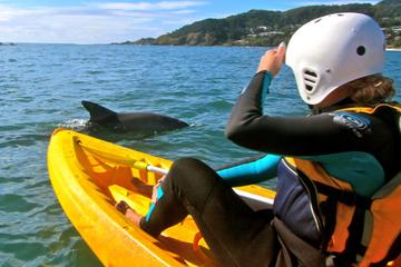 Byron Bay Combo: Hinterland Tour Including Minyon Falls and Kayaking with Dolphins