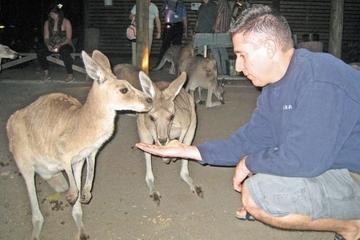 Cairns Night Zoo Safari and Barbecue Dinner