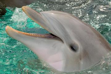 Cancun Dolphin Royal Swim