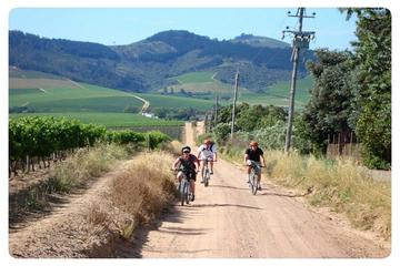 Cape Winelands Cycle Tour and Wine Tasting from Stellenbosch
