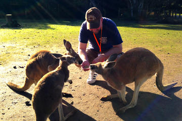 Caversham Wildlife Park, Swan Valley Wine Tasting, The Pinnacles and Sandboarding Day-Trip from Perth