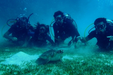 Certified Guided Reef Dive in St Thomas