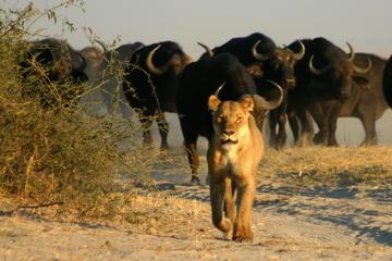 Chobe National Park Camping Safari 3-Days 2 nights