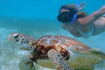 Cozumel Shore Excursion: Akumal Bay and Yal Ku Lagoon Snorkel and Sea Turtle Adventure