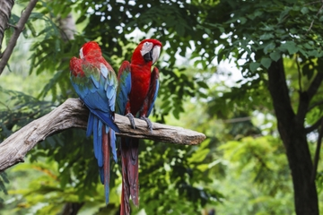 Curacao Amazonia Rainforest Mystery Adventure