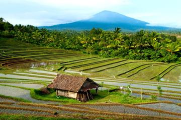 Day Trip to Northern Bali