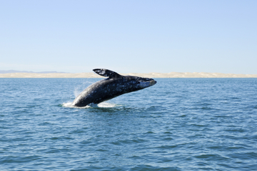 Deep-Sea Fishing or Whale-Watching Full-Day Excursion from Bilbao