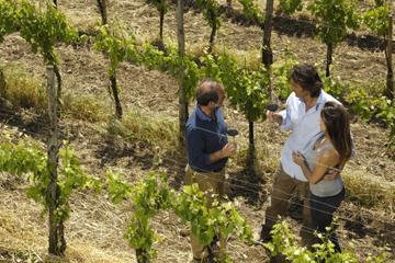 Delta Wine Adventure