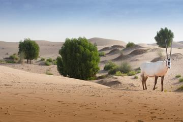Desert Safari Private Tour with Dinner from Abu Dhabi