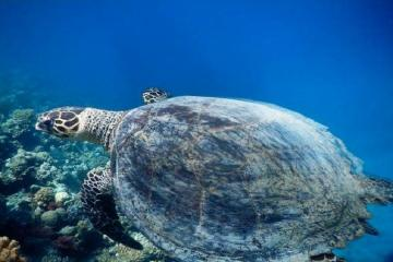 Diving Trip with Morning and Afternoon Dive from Hurghada