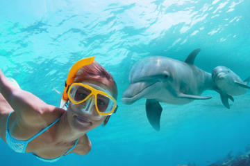 Dolphin Encounter and Snorkeling Combo at Shell Island