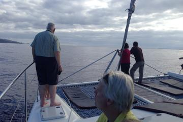 Dolphins and Whales Watching in a Luxurious Catamaran