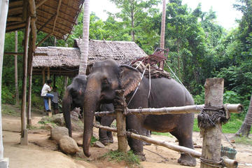 Elephant Camp and Jeep Safari Tour including Lunch from Phuket