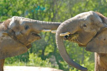 Elephant Sanctuary Tour from Kuala Lumpur