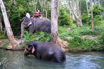 Elephant Trekking in the Jungle of Krabi