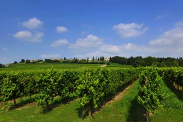 En Route of Venetian Wine 7 Day Tour