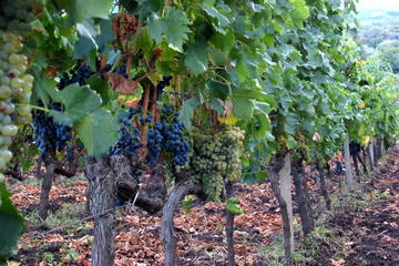 Etna Full-Day Wine Tour