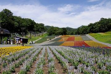 Fukiware Falls, Lavender Fields and Peach Orchard Day Trip from Tokyo