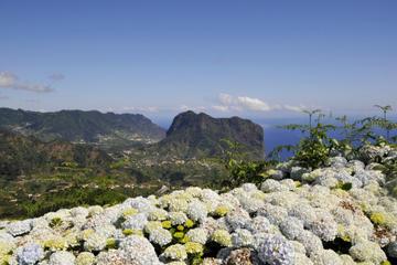 Full Day East Madeira - Camacha, Pico do Ariero, Ribeiro Frio, Portela, Santana