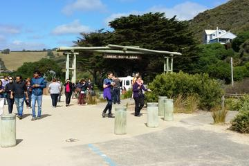 Full-Day Great Ocean Road Tour from Melbourne