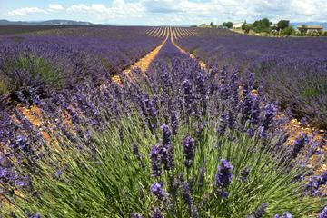 Full-day small group lavender tour to Valensole, Moustiers Sainte Marie and Verdon from Aix-en-Provence