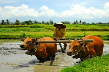 Full-Day Tour: Local Life in Bali