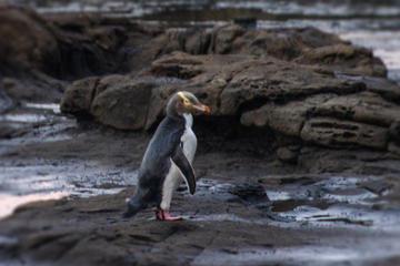 Full-Day Wildlife Tour from Dunedin