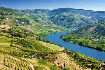 Full-Day Wine Tasting Tour in the Douro Valley with Lunch