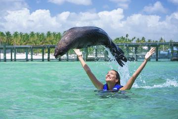Fur Seal Encounter in Punta Cana