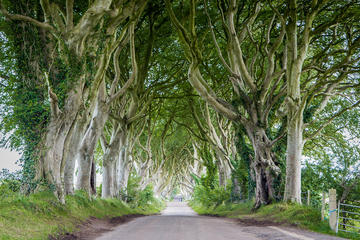 'Game of Thrones' Locations Tour Along The Causeway Coast from Belfast