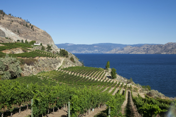 Golden Mile Wine Tour from Osoyoos