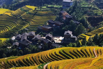 Guilin Bus Tour of Longji Rice Terraces at Ping'an Village