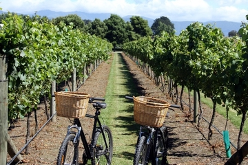 Half-Day Electric Bike Vineyard Tour from Nice