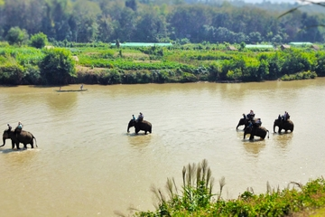 Half-Day Experience: Elephant Village Camp, Lao long boat ride and Tad Sae Waterfall