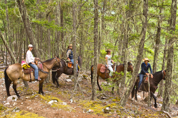 Half Day Guided Horseback Ride at Birkenhead Lake