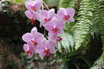 Half-Day Kota Kinabalu Orchid Tour