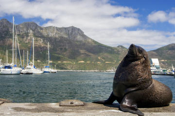 Hout Bay, Cape Peninsula and Optional Boulders Beach Penguins Day Trip from Cape Town