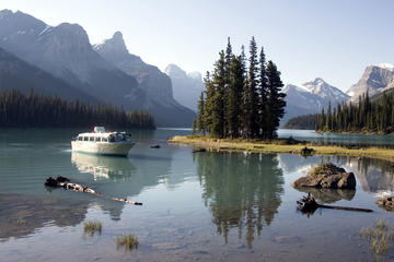 Jasper National Park Wildlife and Waterfalls Tour
