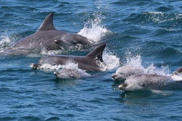 Jervis Bay Dolphin Eco Cruise