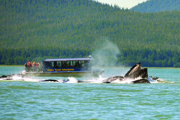 Juneau Whale Watching and Salmon Bake Combo