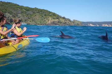 Kayak with Dolphin from Rainbow Beach