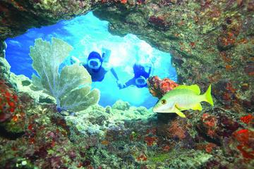 Key West Living Coral Reef Snorkel Adventure