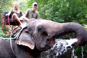 Khao Yai National Park and Elephant Ride Day Trip from Bangkok